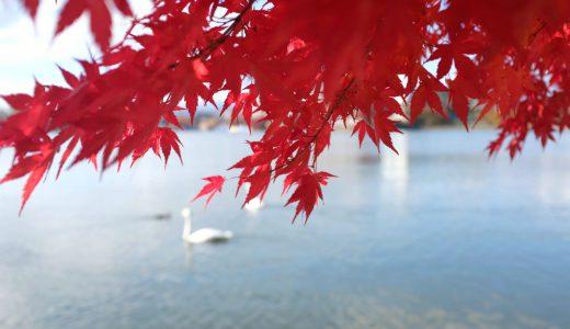 高松公園(高松の池)の紅葉情報2019。白鳥と紅葉のコラボは必見!見頃、混雑情報も。