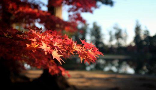 毛越寺の紅葉情報2019。美しき紅葉に染まる浄土式庭園。見頃、混雑情報も。