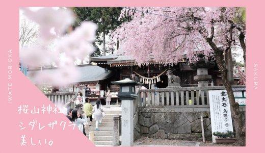 桜山神社の桜・お花見情報2019。シダレザクラが美しい神社