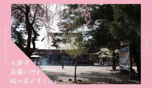 毛越寺の桜・お花見情報2019。庭園に佇む桜の姿が美しい