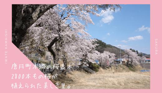 唐丹町本郷の桜並木・お花見情報2020。2800本の桜彩る美しき里|釜石市