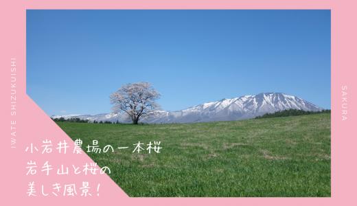 小岩井農場の一本桜・お花見情報2020。GWが見頃!|雫石町