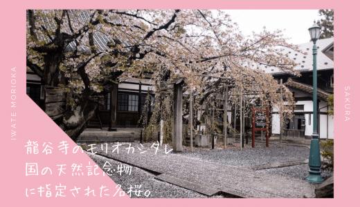 龍谷寺のモリオカシダレ・お花見情報2020。国の天然記念物の名桜|盛岡市